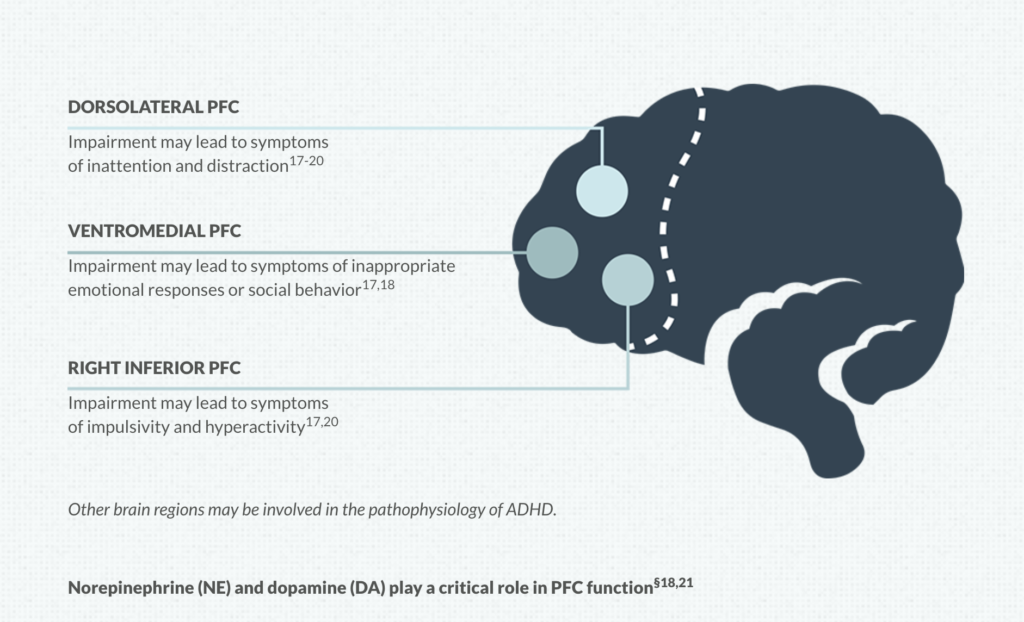 Neurotransmitters Role In At-Home Adhd Testing